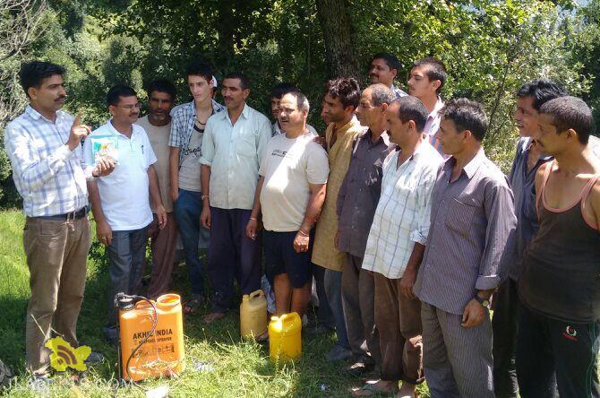 KVK SKUAST-J, Doda conducts field demonstration on management of paddy blast