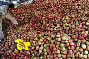 J&K Price Forecast of Apple for the year 2016