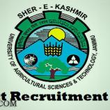Junior Research Fellow, Project Assistant, Lab attendant jobs in SKUAST Kashmir